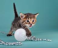 Small  kitten among Christmas stuff Royalty Free Stock Photos