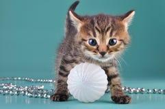 Small  kitten among Christmas stuff Stock Photo