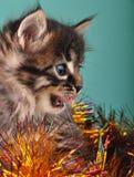 Small  kitten among Christmas stuff Royalty Free Stock Photo