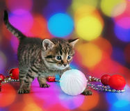 Small  kitten among Christmas stuff Stock Photo