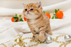 Small kitten and Christmas toys Royalty Free Stock Photo