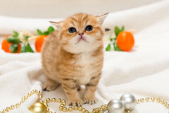 Small kitten and Christmas toys Royalty Free Stock Images