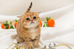 Small kitten and Christmas toys Stock Photos