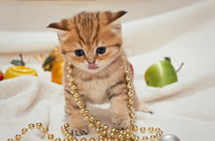 Small kitten and Christmas toys Royalty Free Stock Image