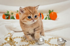 Small kitten and Christmas toys Royalty Free Stock Photos