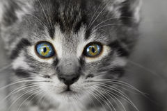 Small kitten - close-up. Partial coloring photo of small kitten - close-up Stock Image