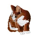 Small kitten color vector Stock Photo