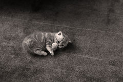 Small kitten Stock Photos