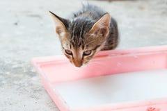 The small kitten. stock image