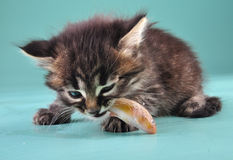 Small kitten eats a fish Royalty Free Stock Images