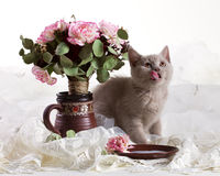 Small kitten and flowers Stock Photo