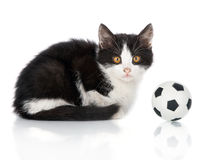 Small kitten with football ball Royalty Free Stock Images