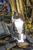 Small kitten in the garden stock images