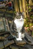 Small kitten in the garden Stock Photography