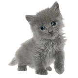 Small kitten go ahead isolated Stock Photos