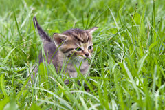 Small kitten in the grass Stock Images
