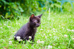 Small kitten on grass Royalty Free Stock Image