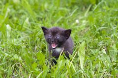 Small kitten in the grass Stock Photo