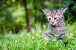 Small kitten on grass Stock Images