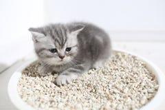 Small kitten in his litter Stock Image