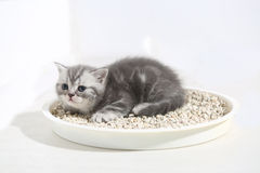 Small kitten in his litter Royalty Free Stock Images