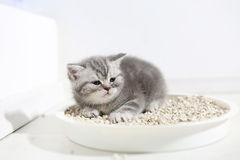 Small kitten in his litter Stock Photography