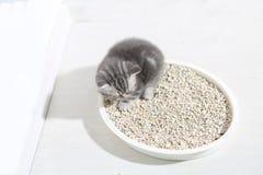 Small kitten in his litter Stock Photos