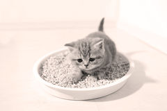 Small kitten in his litter Royalty Free Stock Photo