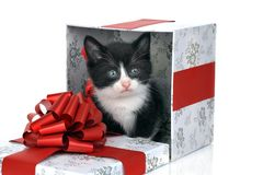 Small kitten inside gift box Royalty Free Stock Images