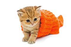 Small kitten in a knitted sweater. Isolated on white Royalty Free Stock Photography