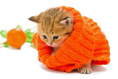 Small kitten in a knitted sweater. Isolated on white Stock Images