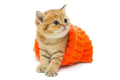 Small kitten in a knitted sweater. Isolated on white Stock Image