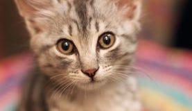 Small kitten look Stock Image