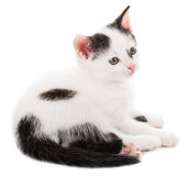 Small kitten lying Stock Photos