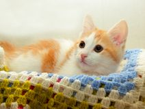 Small kitten lying on the rug and closely monitors Stock Images