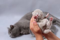Small Kitten Meows In Hands Of Child Stock Images