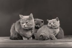 Small kitten with mother on a wooden background,