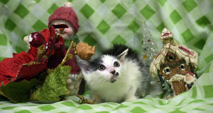 Small kitten near toy snowman Royalty Free Stock Photo