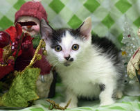 Small kitten near toy snowman Stock Photography