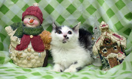 Small kitten near toy snowman Stock Photos