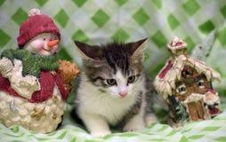 Small kitten near toy snowman Stock Image