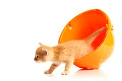 Small kitten and orange hardhat Royalty Free Stock Photos