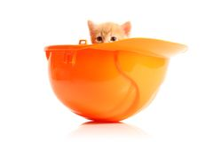 Small kitten and orange hardhat Stock Images