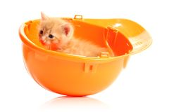 Small kitten and orange hardhat Royalty Free Stock Images
