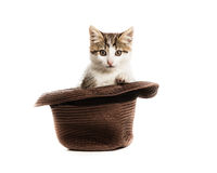 A small kitten peeks out of a hat Royalty Free Stock Images