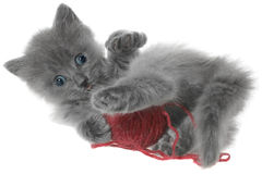 Small kitten playing with a ball of yarn Stock Images