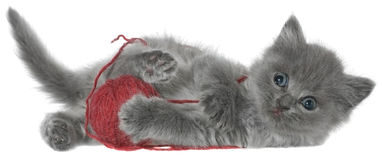 Small kitten playing with a ball of yarn Stock Photo