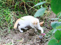 Small kitten playing with crab with paws stock images
