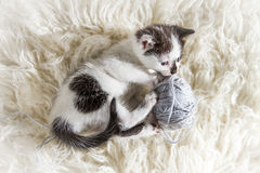 Small kitten playing with hank Royalty Free Stock Photos