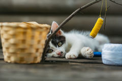Small kitten playing with thread on twig Stock Photos